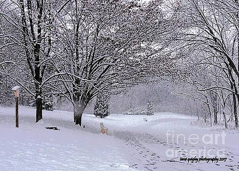 Tami Quigley - The First Snowfall