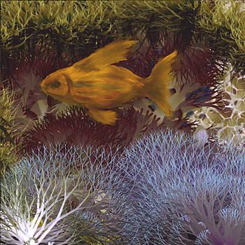 The fish by Nabil REJAIBI