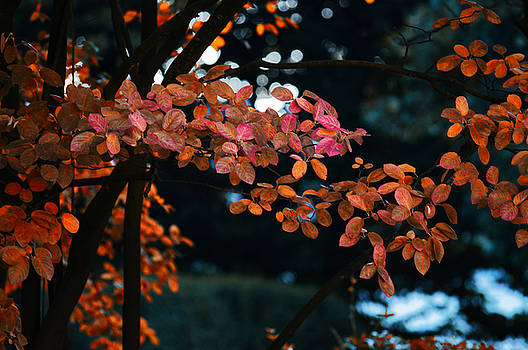 The flair of autumn by Nicole Frischlich