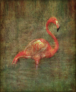 The Flamingo by Hanny Heim