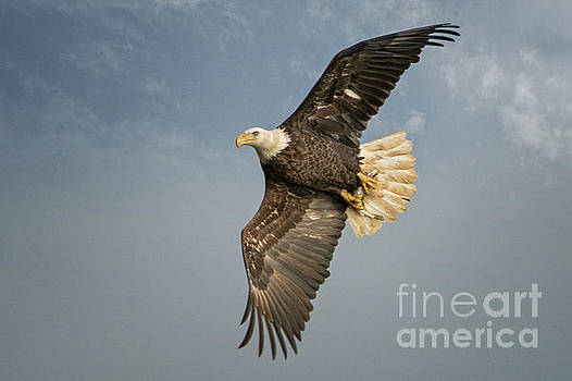 The Flight by Craig Leaper