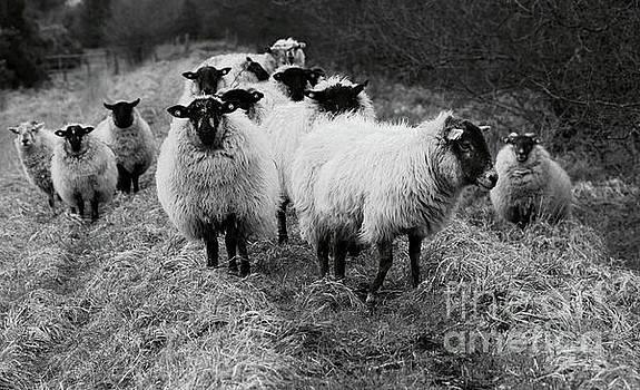 The Flock 1 by Peter Skelton