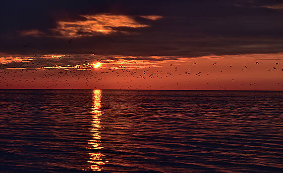The Flock at Sunset by Maria Keady