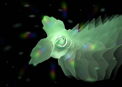 The Floral Dance of Butterfly Rose - GREEN by Jacqueline Migell