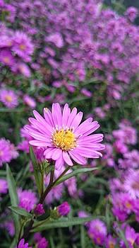 The Flower by Akshatha Karthik