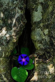 The Flower by Thomas R Fletcher