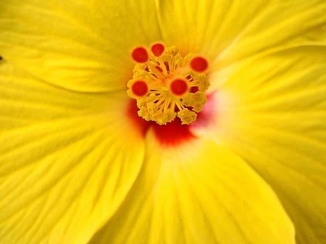 The Flowers Eyes-debbie-may by Debbie May