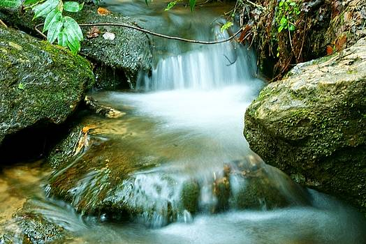 The Flowing Brook by Adam Dowling