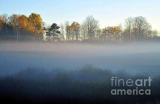 The Fog Comes on Little Cat Feet by Terri Gostola
