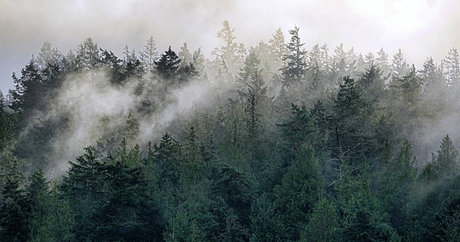 The Fog in the Trees by Rick Lawler