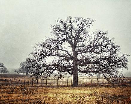 The Foggy Oak by Lisa Russo