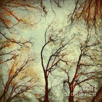 Dimitar Hristov - The Forest