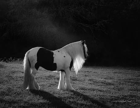 Terry Kirkland Cook - The Forest Moonlight