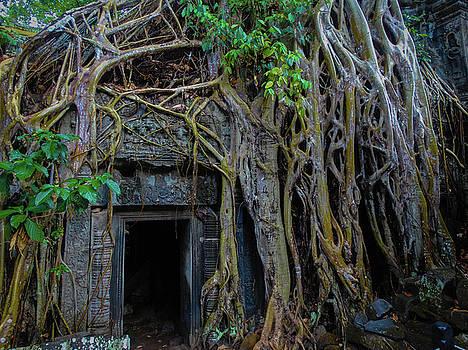 The Forgotten Door by Paki O'Meara
