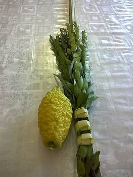 The Four Species - Lulav and Etrog Set by Eliyahu Shear