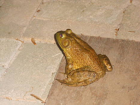 The Frog by Darlene Custer