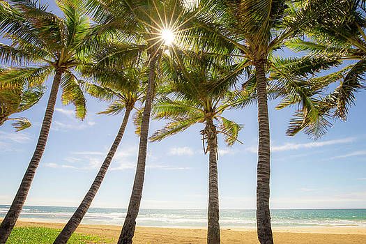 The Garden Isle's Palms by Peter Irwindale