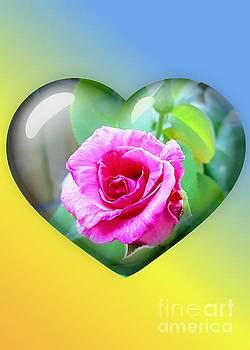 Rachel Hannah - The Garden Of The Heart