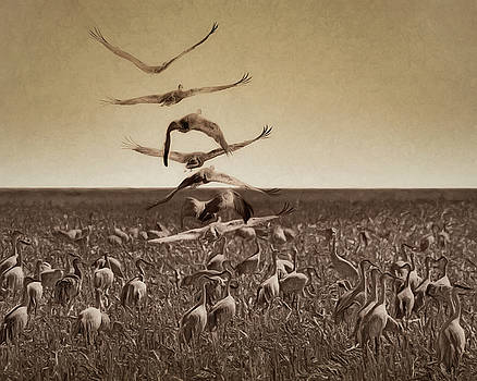 Nikolyn McDonald - The Gathering - Sandhill Cranes