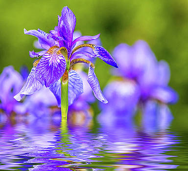 The Gentleness of Spring 2 - Reflection by Steve Harrington
