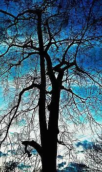 The Ghostly Tree by Diamante Lavendar