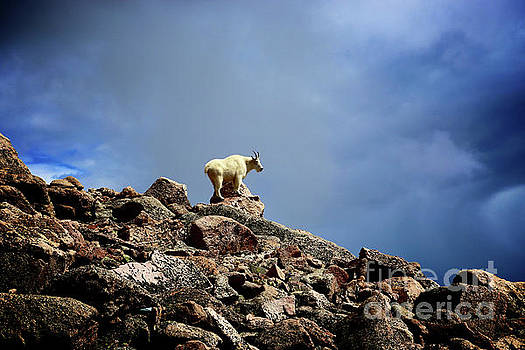 The Goat at the Top of the World by Steve Boice