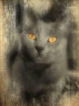 The golden stare by Trisha Scrivner