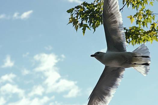 The grace of flight by Asbed Iskedjian