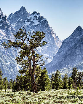 The Grand Teton with Pine and Sage by Richard Rodney Greenough