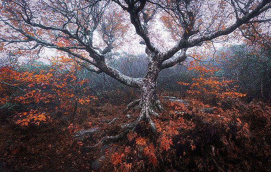 The Great Craggy Tree by Dawnfire Photography