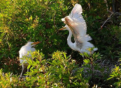 Patricia Twardzik - The Great White Egret Stretch