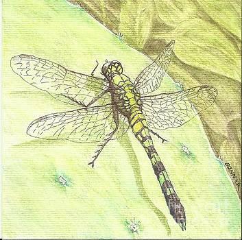 The Green Dragon by Sue Bonnar