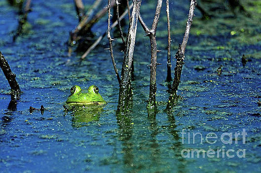 The Green Frog by Paul Mashburn