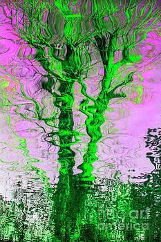 The Green Ivy Tree Reflection by Daliana Pacuraru