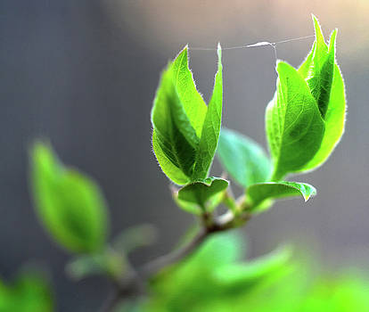 The Green Leaf by Jeffrey Platt