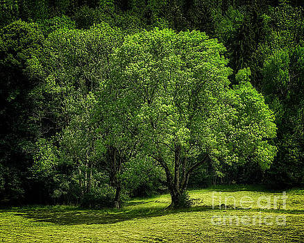 The Green of Summer by Edmund Nagele