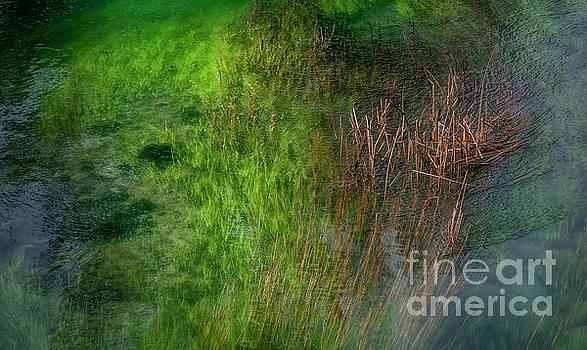 Hernan Bua - The Green River