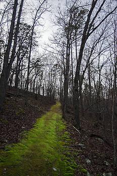 The Green Trail by Adam Lucio