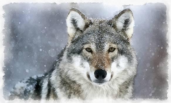 The Grey Wolf by Maciek Froncisz