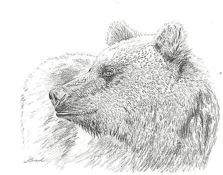 The Grizzly Bear by Sarah Bevard