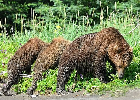 Patricia Twardzik - The Grizzly Bear Stretch