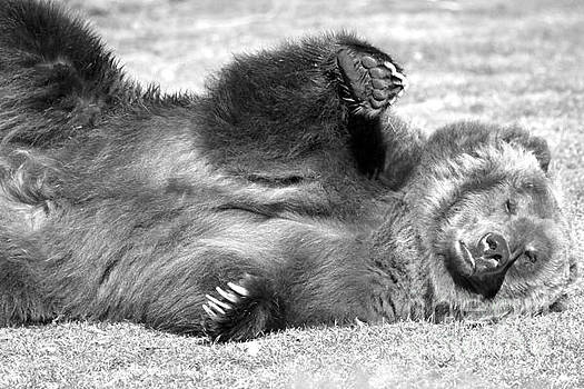 Adam Jewell - The Grizzly Wave - Black And White