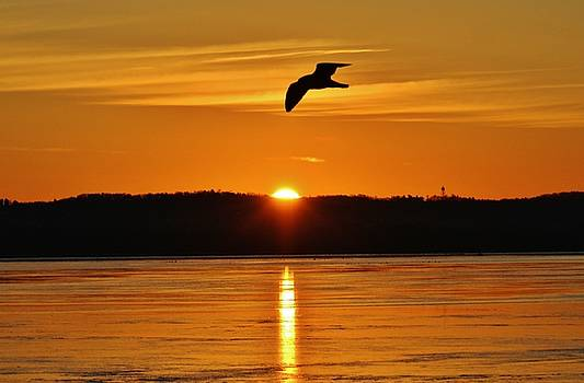 The Gull and the Sunrise by Thomas McGuire