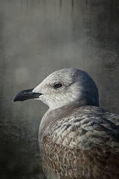 Karol Livote - The Gull