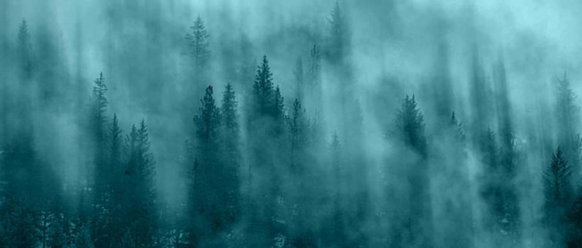 The Haunted  by Joy McAdams