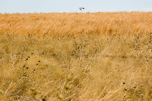 The Hayfields by Scarlett Chambers