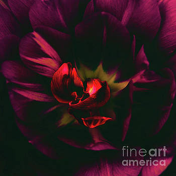 The heart of a flower by Debbie Nobile