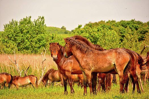 The herd 2 by Ingrid Dendievel