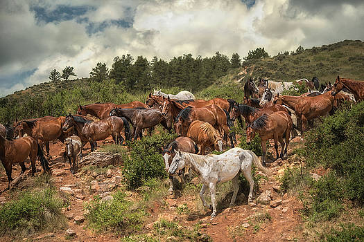 The Herd by Ryan Courson