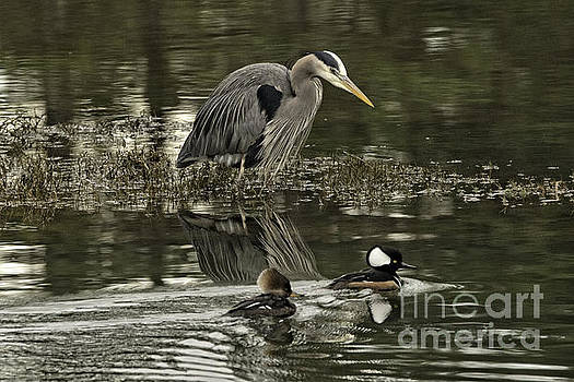 Moore Northwest Images - The Heron